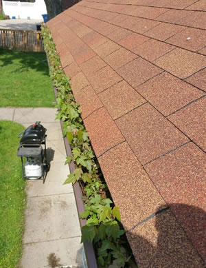Gutter Cleaning Services Ham Lake Minnesota
